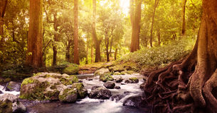 Creek in the forest Royalty Free Stock Images