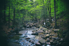 Creek in forest Royalty Free Stock Images