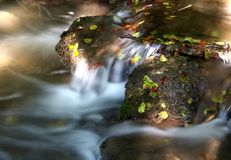 Creek in the forrest Stock Image