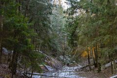 The creek froze in a ravine. Which crosses a thick and snowy forest Royalty Free Stock Photo