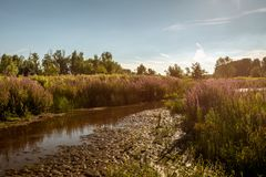 Old creek on a summer evening Royalty Free Stock Photography