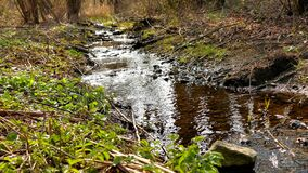 Creek in a German forest in spring