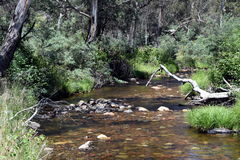 Creek with grass, reeds and rocks in the forest. Royalty Free Stock Photos