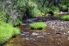 Creek with grass, reeds and rocks in the forest. Stock Image