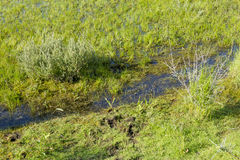 Creek in the green Dutch field Royalty Free Stock Photos
