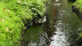 Creek in the green forest. Foreground stock video footage