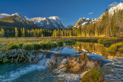 Creek has been damed by beavers in Idaho Stock Images