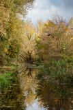 Creek in Holland with trees in autumn leaf color stock photography