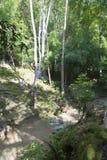 The Creek i parkera Royaltyfria Foton