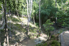 The Creek i parkera Fotografering för Bildbyråer