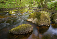 Creek in Ireland, water flows gentle in green, fertile environment. Walking the wicklow way through the glencree valley is beautiful royalty free stock images