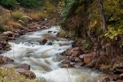 Creek Royalty Free Stock Photo