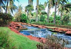 Creek in a jungle Stock Image