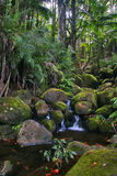 Creek in jungle of Hawaii Stock Images