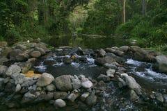 Creek in jungle of Hawaii Royalty Free Stock Photos