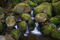 Creek in jungle of Hawaii Stock Photos