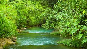 Creek among the jungle Royalty Free Stock Image