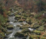 Creek Kamenice in Jizerske hory mountains Stock Image