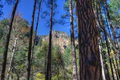creek kanionu sławna jego dębowa czerwone skały piaskowcowego sedony Obrazy Stock