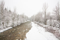 Creek Landscape in Winter royalty free stock photography