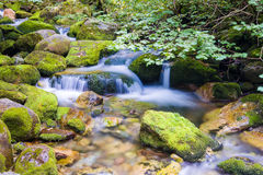 Creek in the Ligurian Alps Royalty Free Stock Images