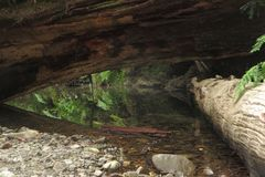 Creek and Logs stock photography