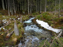 Creek in low tatras Royalty Free Stock Photos