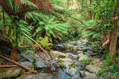 Creek in Maits Rest Rainforest Walk, Apollo Bay Royalty Free Stock Image