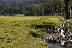 Creek Meadow拉森国王国家公园,加利福尼亚 免版税库存图片