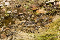 Creek meandering stock images