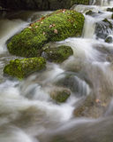 The creek royalty free stock photography