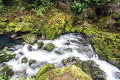 Mossy rocks at a creek in Oregon`s famous Columbia River Gorge. Pacific Northwest. A creek in motion, Oregon`s famous Columbia River Gorge. Pacific Northwest stock photography