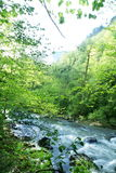 Creek in mountain Royalty Free Stock Photo