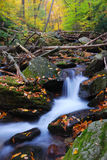 Creek in mountain with Autumn yellow maple trees. Autumn creek closeup with yellow maple trees and foliage on rocks in forest with tree branches stock images