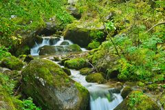 Creek Royalty Free Stock Photos