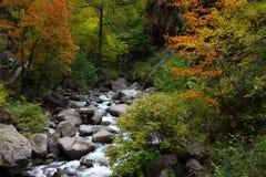 Creek in the mountains. The creek in the mountains Stock Image