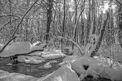 The Creek na floresta em montes Carpathian pequenos - Eslováquia do inverno Fotos de Stock