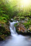 Creek in the national park Sumava Stock Photo
