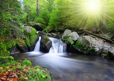 Creek in the national park Sumava Royalty Free Stock Image