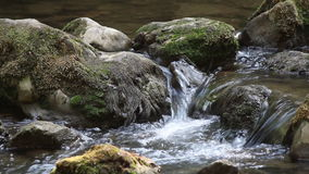 Creek nature scene stock video
