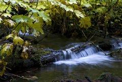Creek Near Proxy Falls Stock Photo