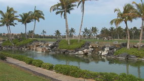Creek and palm trees on the shore stock video footage