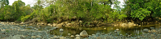 Creek Panorama. A narrow stream in southern Costa Rica Stock Image
