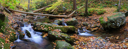 Creek panorama with tree branches in forest Stock Images