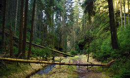 Creek and path in national park Royalty Free Stock Photo