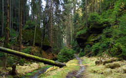 Creek and path in national park Stock Photography