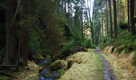 Creek and path in national park Royalty Free Stock Image