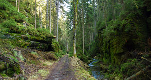Creek and path in national park Royalty Free Stock Photography