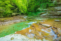 Creek with pure water Stock Photography
