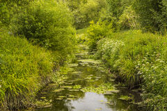 Creek on the Railway Land Wildlife Trust Stock Image